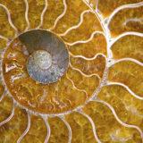 太古の自然と歴史が作り出す神秘の宝石「アンモライト」とは?